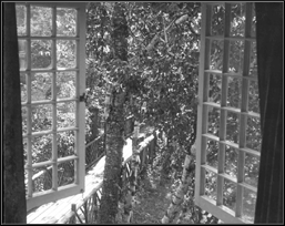 —Window at Cedar Lodge, 1950s